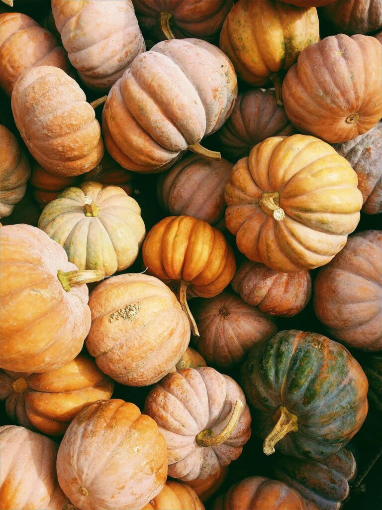 zoom in on assortment of small orange yellow white and green pumpkins in a pile